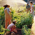 neighborhood-garden-m